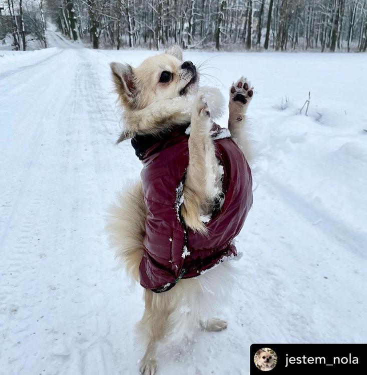 HUNTER Tampere Hundjacka Röd