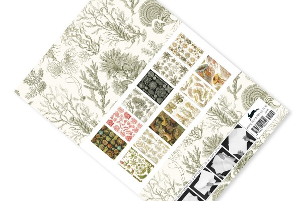 Gift & Creative Paper Book Art forms in nature