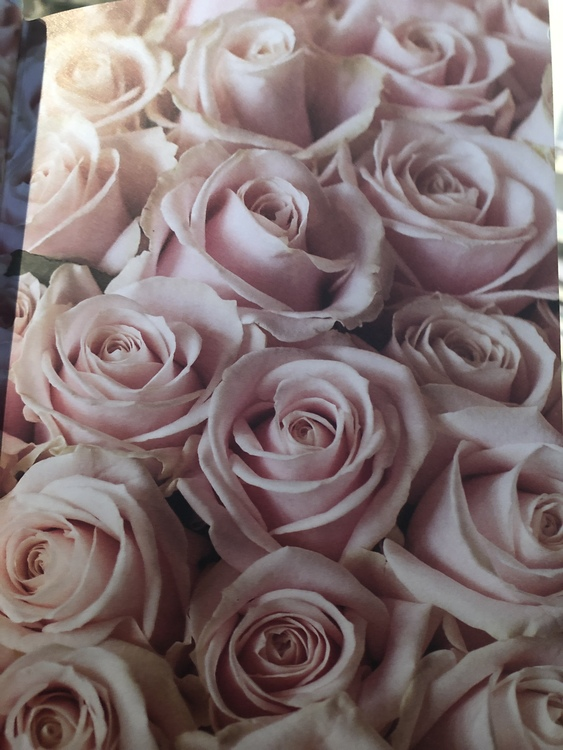 Roses and thorns Gratitude journal