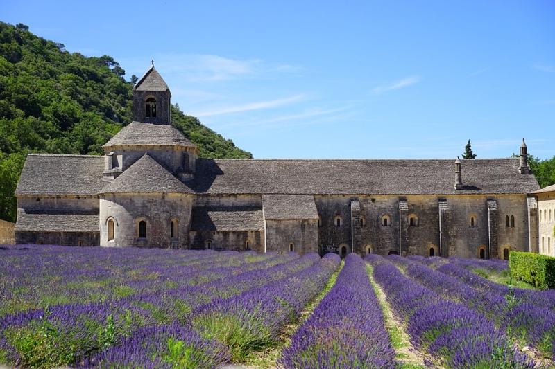 Lavendel (Lavandula angustifolia eller Officinalis)