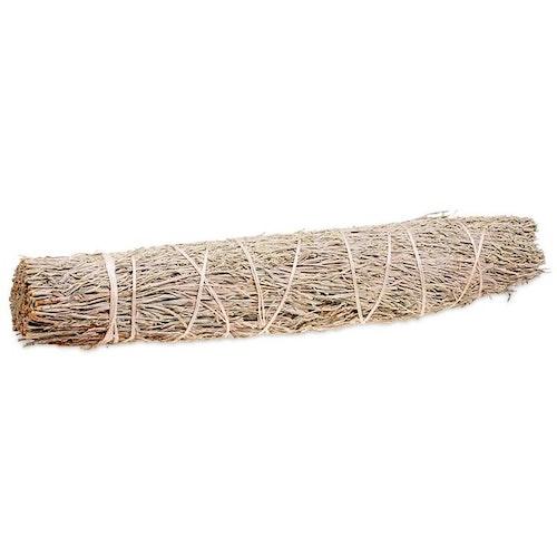 Shasta Sage (Salvia), Smudge L