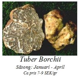 Tuber Borchii