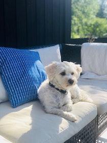 Havsbris cushion