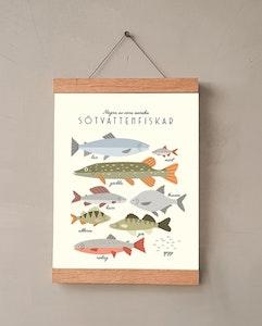 Sötvattenfiskar