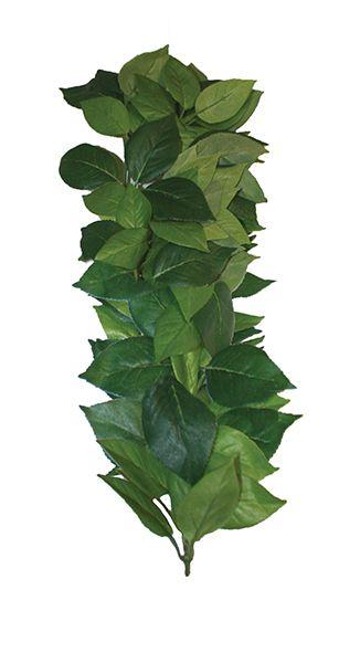 Ficus silk vine 60 cm
