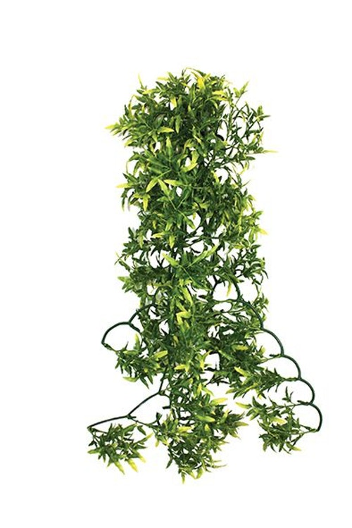 Croton plant 40 cm
