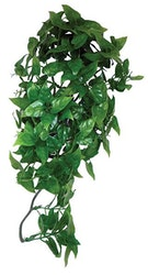 Philodendron hanging plant 40cm