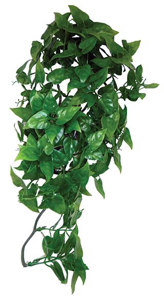 Philodendron hanging plant 30cm