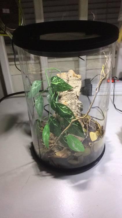 Runda terrarium 25/30 cm med led ljus
