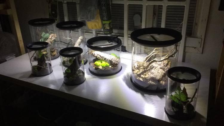 Runda terrarium 29/30 cm med led ljus