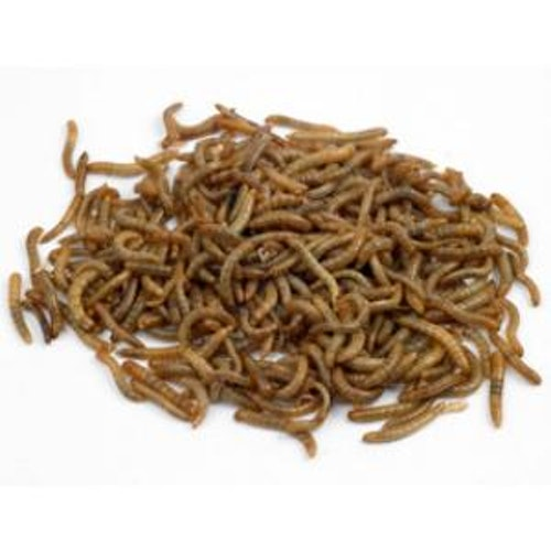 Buffaloworms 30 G