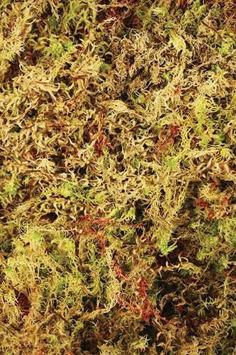 Habitat moss compact brick