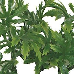 Papaya leaf vine 35 cm