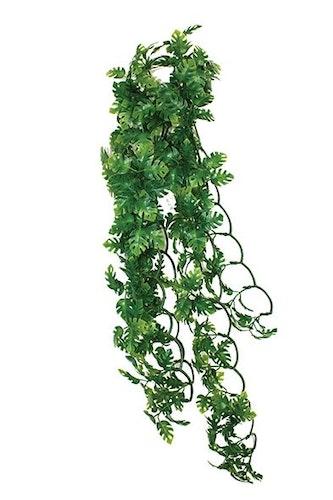 Split philodendrob 40 cm