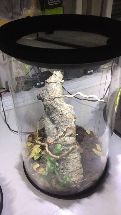 Runda terrarium 17/25 cm med led ljus
