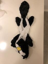 roadkill skunk