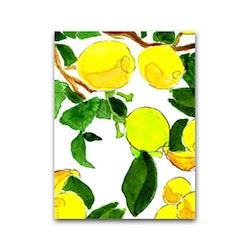Nobhilldesigners litet kort Citroner