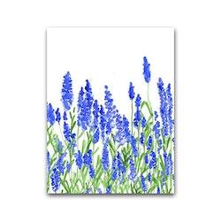 Nobhilldesigners litet kort Lavendel