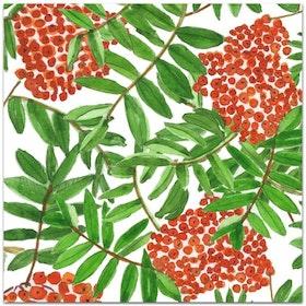 Nobhilldesigners kort med kuvert Rönnbär