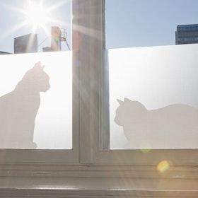 Siluett Frost fönsterfilm Cats