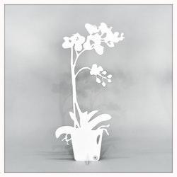 Älska Plåt Orkidé vit