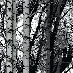 Dekorplast - Skog
