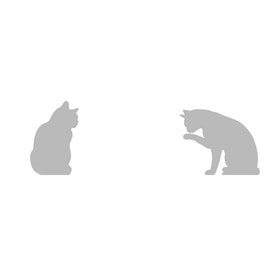 Fönsterfilm - Katter