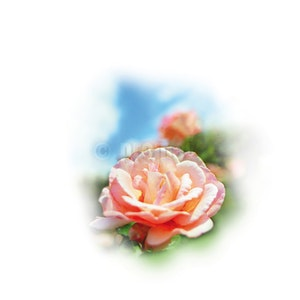 Medisana parfymolja rosor
