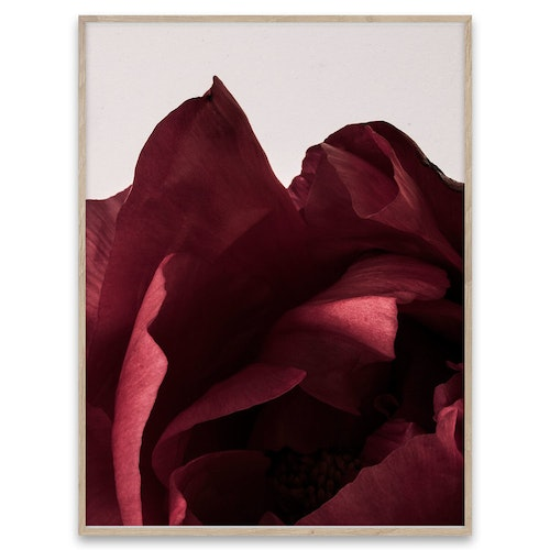 Peonia, poster, Paper Collective