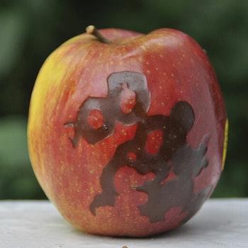 Äpple med tatuering foto Cicci Wik