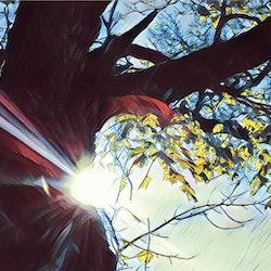 Sol i träd foto Cicci Wik