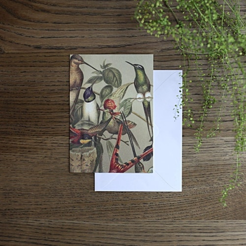 Card, Hummingbirds Assorted