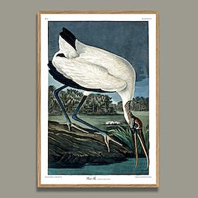 Wood Ibis 50 x 70 cm