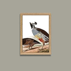 The Californian Partridge - Mini Print