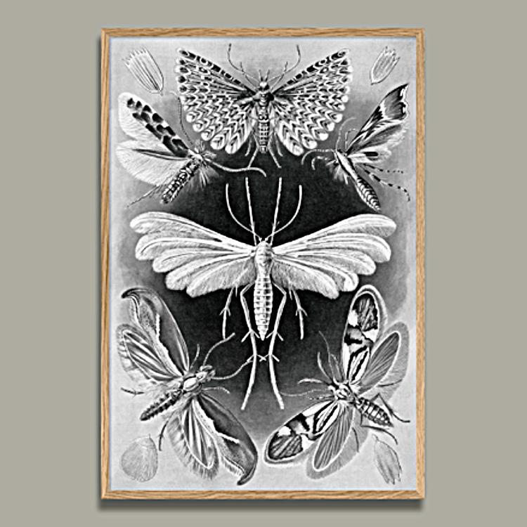 Alucita, Natures Art Form 50 x 70 cm