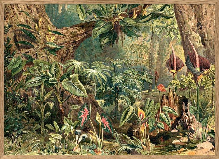 Aracae 70 X 100cm. Detta häpnadsväckande encyklopediska tryck ger en fantastisk atmosfär där den placeras. Ursprungliga bilden går tillbaka till 1800-talet. Tryckt på matt papper, The Arni Concept