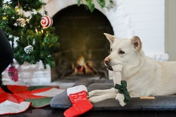 Merry Woofmas Good Dog Stocking