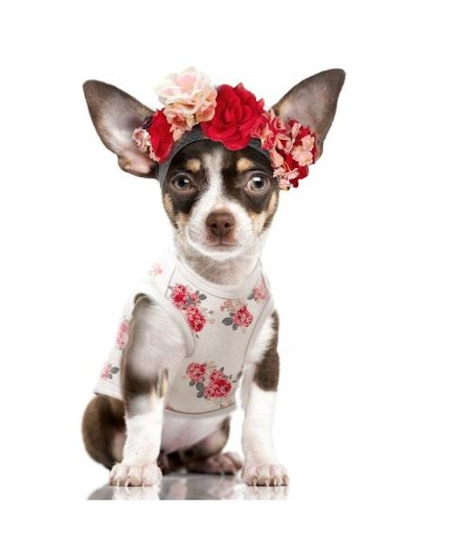 T-shirt Rosalie Hundkläder