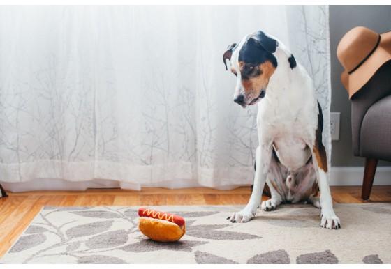 hundleksak-hot-dog-korv