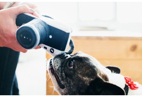 hundleksak-kamera