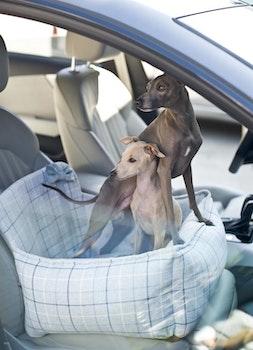 Bilstol till hund, Charm - Blå