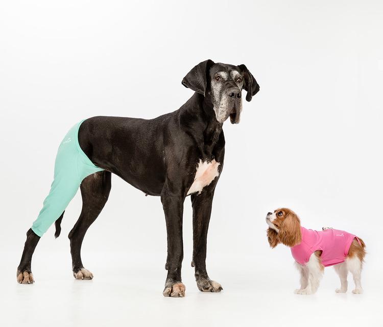 Operationsdrakt-sterilisering-katt-hund-löpning-kastrering
