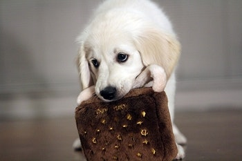 Dog Diggin Design Chewy Vuiton Purse, Brown