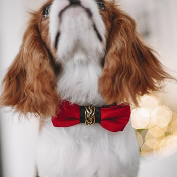 Bow-tie, Red Elegance