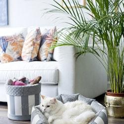 Lisbon, Hundbädd Grey & White
