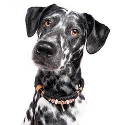 Hundhalsband Tiffanys