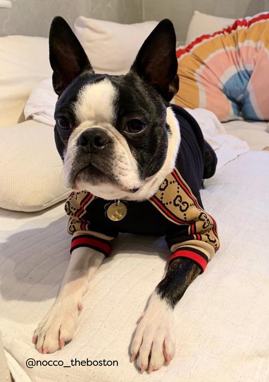 Tröja, Fashion Dog