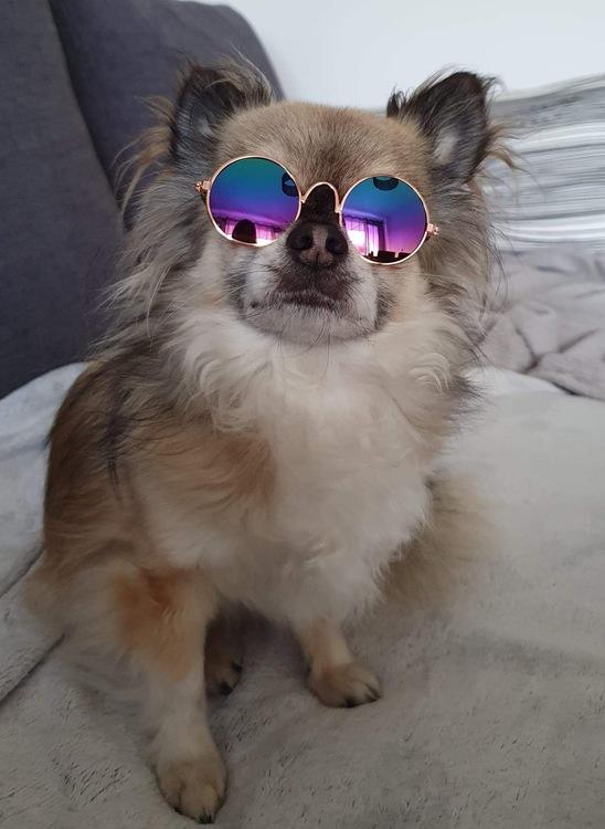 Glasögon, Hund/Katt