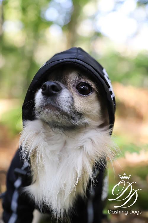 Vindjacka, The Dog Face, svart