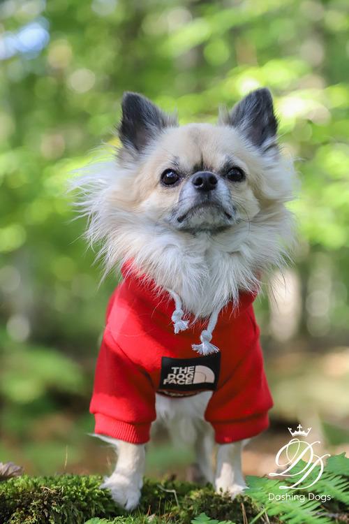 Hoodie, The Dog Face, röd